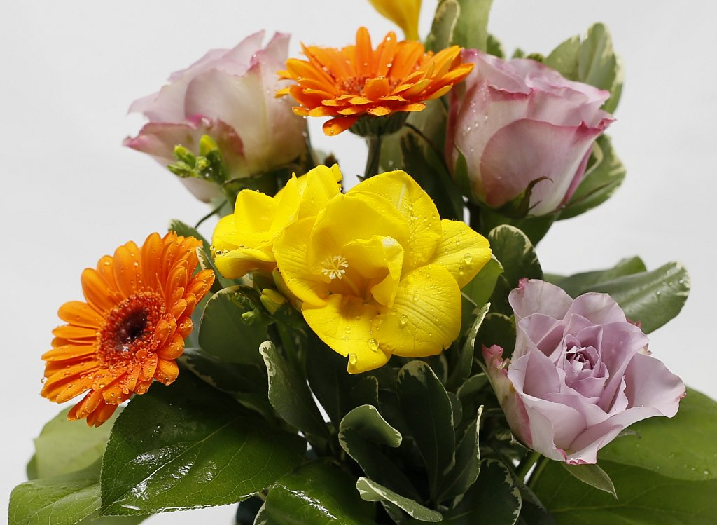 5-Bol-cu-trandafiri-minigerbera-si-frezii3.jpg